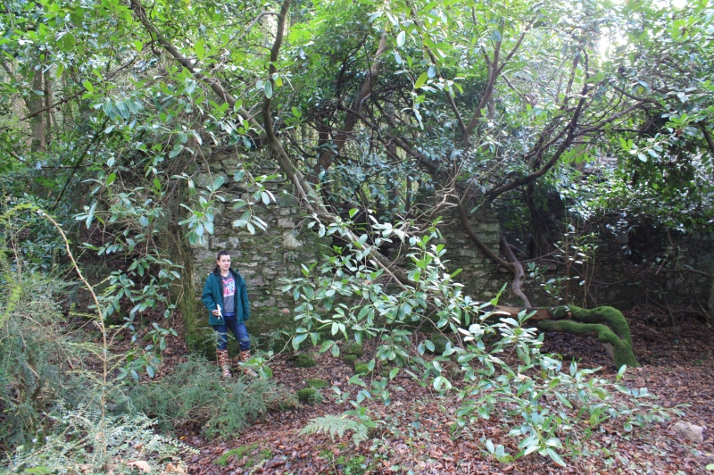 The ruins of a vernacular building present on the north slope of the Curragh Woods enclosure