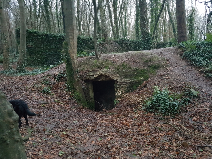 Remains of an icehouse at Rostellan, with surviving traces of the walled garden beyond (Sara Nylund)